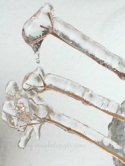 icicle beauty creative